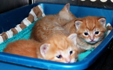 Just three of the 22 kittens abandoned at the Gananoque and District Humane Society on April 24.