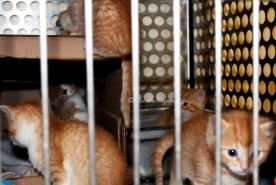 Cages were crawling with kittens after 22 of them were abandoned at the Gananoque and District Humane Society on April 24.